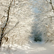 Foto Stock: Winter lane
