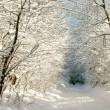 Winter lane — Stock Photo