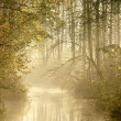 Misty forest river — Stock Photo #2049085