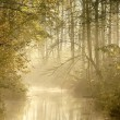 Misty forest river - Stock Photo