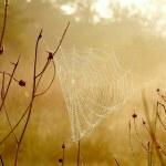 Spider web at dawn — Stock Photo