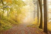 Picturesque forest path — Stockfoto