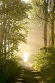 Sunrise blowing on the forest path — Foto Stock