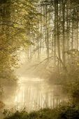 Misty forest river — Stock Photo
