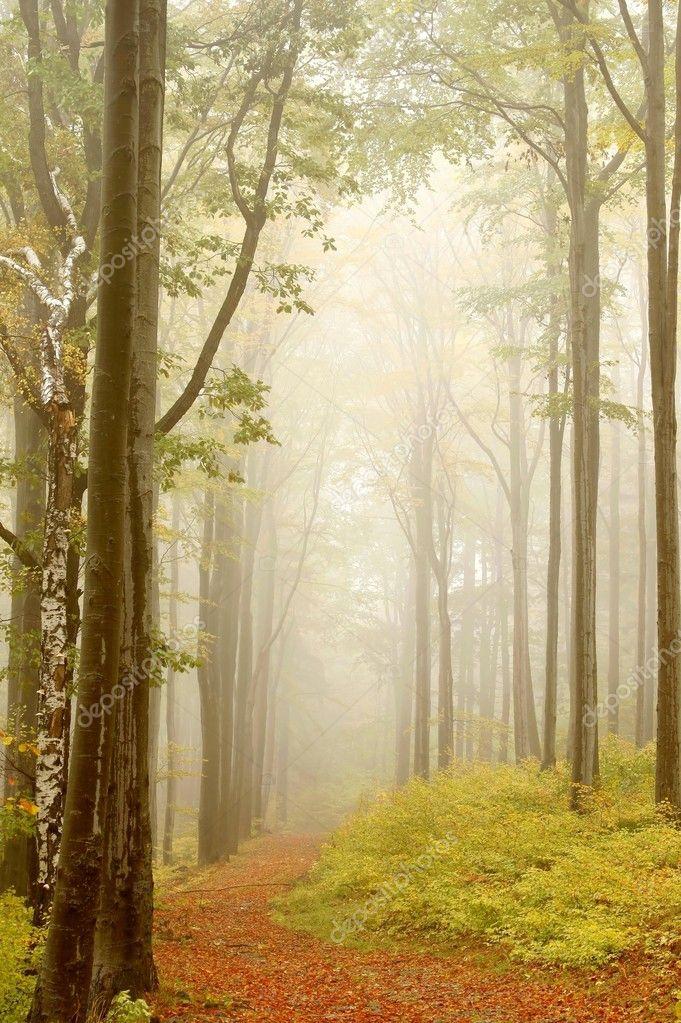 Фотообои Путь через сказочный лес