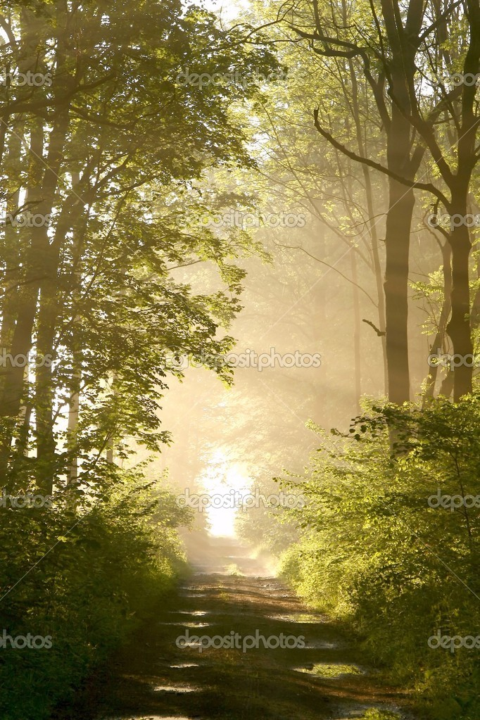 Misty forest path backlit by the light of the rising sun. Photo taken in May.  Stock Photo #2044119