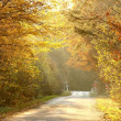 Forest road in autumn colors - Stock Photo