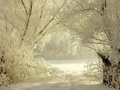 Winter lane among white willows — Stock Photo