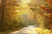 Forest road in autumn colors — Stock Photo