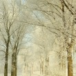 Royalty-Free Stock Photo: Scenic winter lane