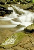 Forest stream — Foto de Stock