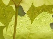 Drops of water on a leaf — Stockfoto