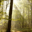 Autumn woods backlit by morning sun — Stockfoto