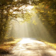 Road through autumn forest at sunrise - Stock Photo
