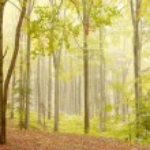 Misty beech woods on the mountain slope — Stock Photo #2283510