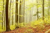 Forest path with beech trees — Stock Photo