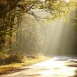 Misty estrada através da floresta de outono — Foto Stock