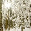 Winter forest — Stock Photo #2295174