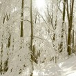 Sunbeams falls into winter forest — Stock fotografie