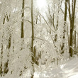 zonnestralen valt in winter forest — Stockfoto
