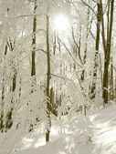 Sunbeams falls into winter forest — Stock Photo
