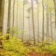 Misty autumn woods - Stock Photo