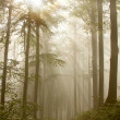 Trail through a misty forest - Stock Photo