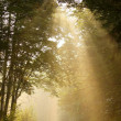 Sunbeams falls into the misty woods — Stock fotografie