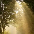 Sunbeams falls into the misty woods - Stock Photo