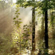 Sunlight falls into the misty woods - Stock Photo