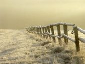 Winter sunrise over misty grassland — Stockfoto
