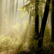 Sunlight falls into the misty woods — Foto de Stock
