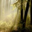 日光霧深い森の中に落ちる — ストック写真