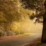Rural road at dusk — Stock Photo