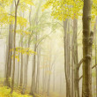 Trail through autumn beech forest - Stock Photo