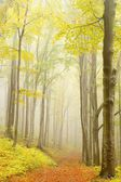 Trail through autumn beech forest — Stock Photo