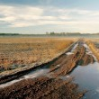 Frozen dirt road in the morning — Stock Photo