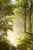 Dirt road through the misty forest at sunrise — Stock Photo
