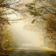 Country road through the misty woods - Stock Photo