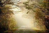 Country road through the misty woods — Stock Photo