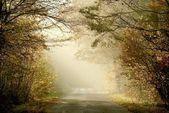 Route de campagne à travers les bois brumeux — Photo