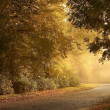Country road at sunset — Stock Photo