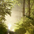 Stock Photo: Path through misty spring forest at dawn