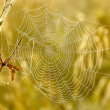 Stock Photo: Cobweb on autumn meadow