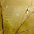 Cobweb at sunrise — Stock Photo #2529203