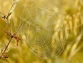 Cobweb on the autumn meadow — Stock Photo