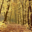 Path through autumn forest — Stock Photo