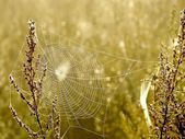Cobweb at sunrise — Stock Photo