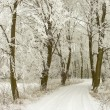 Rural road through winter forest — Stock Photo #2569688
