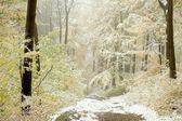 Rastro de otoño — Foto de Stock